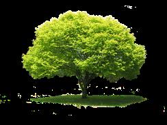 tree-733024_640