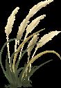 wheat-576548_640
